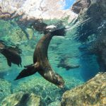 Mexico Sea of Cortez | Snorkeling with Sealion – 1 Day Trip (All Season)